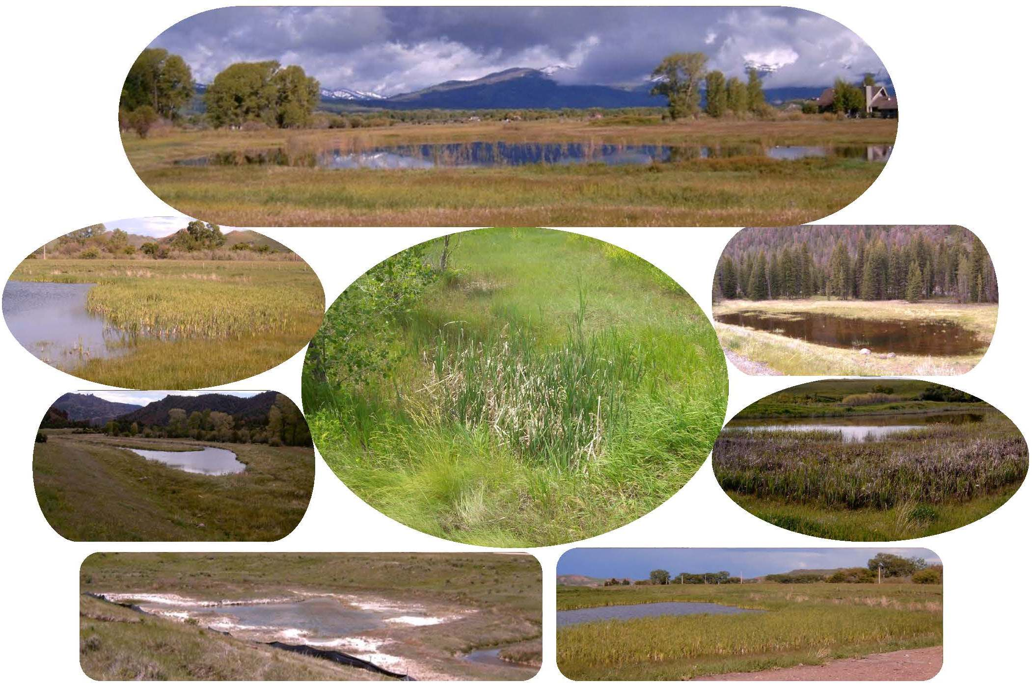 various types of wetlands collage