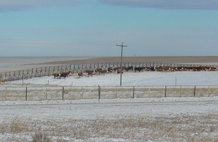 /files/live/sites/wydot/files/shared/Winter_Research/snowfencecattle%20448.jpg